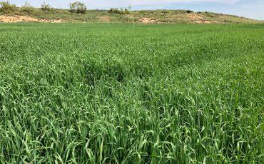 2021年中国燕麦干草进口大幅下降